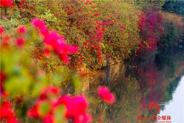 春暖花开 赏花何必远方