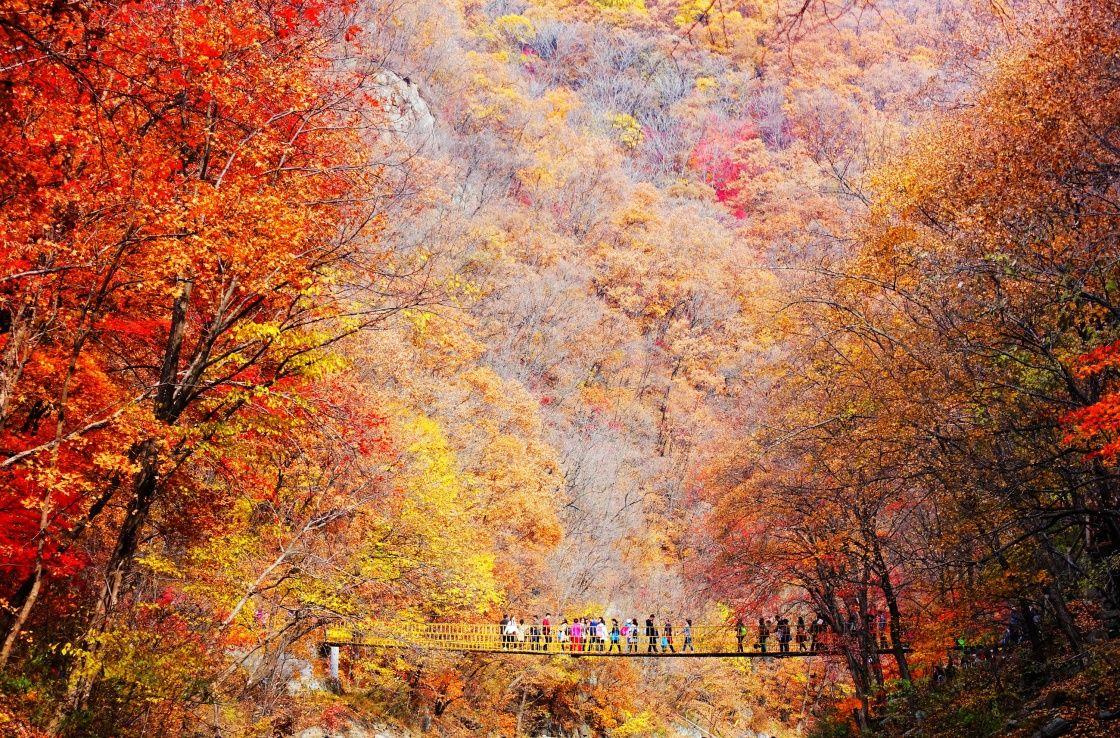 美丽中国 | 金秋调色板
