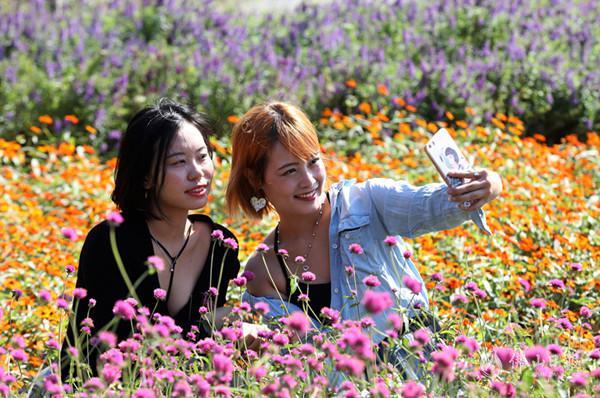 秋高气爽赏花去!禅城的花都开好了,约吗?