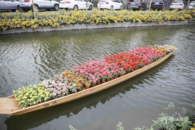 这里的花开得正好!陈村花卉旅游文化节等你来打卡