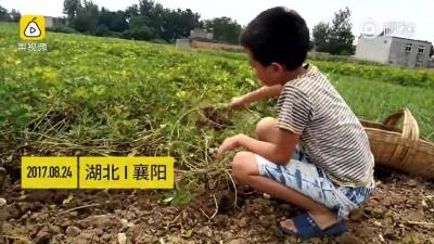"""泪目!父母患重病 10岁男孩边干活边照顾:""""留一个行吗"""""""