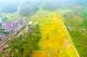 多图丨金色田野 丰收的喜悦