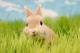 一组清新的小兔纸摄影