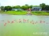 泳士畅游东平河