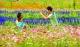 农业文明融入读书文化,南海丹灶翰林湖建设有新思路