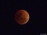 超级蓝血月全食:在佛山拍到的月亮超美!