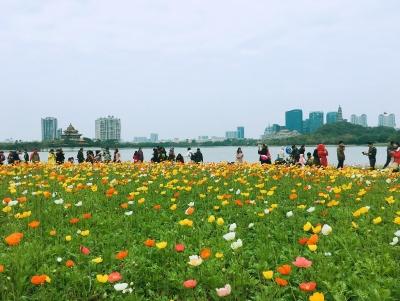 春节期间顺德接待游客同比增长12.94% 顺峰山公园入园人数达28万