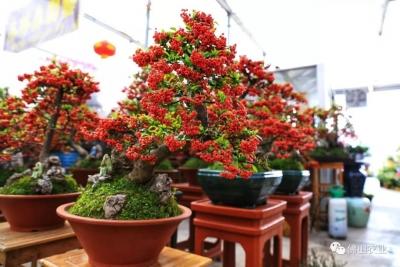 十里花街,近万品种,多图直击佛山最大花市!