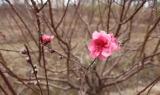 春节约起赏花咯,带你走进三水彩色童话世界
