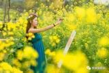 高明荷城一大波油菜花、薰衣草、樱花开了!赏花攻略戳