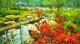 一起赏花吧!3000多株杜鹃盛放五峰公园