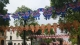 灵芝风筝你见过吗?佛山首届国际风筝文化节周六在三水举办