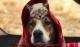 带一猫一狗的旅途,主人拍下这些美好的画面! ????