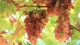 百米葡萄长廊、百香果、大西瓜…暑假就在高明摘果撒欢啦!
