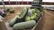 三水盛产的黑皮冬瓜,小暑的餐桌上岂能少了它!
