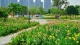 万花争艳!东平河畔2.8万㎡美人蕉花海盛开
