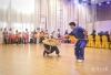 珠三角港澳青少年蔡李佛功夫赛:500名青少年同台竞技