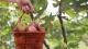 三水藏了个70亩无花果园,现新鲜上市!采摘期持续至年末