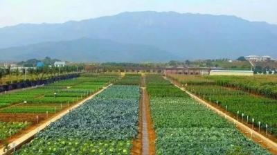 佛山庆祝首届中国农民丰收节活动暨第二届农业嘉年华即将开锣