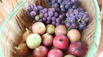 葡萄、百香果...禅城这个生态园瓜果飘香!快快约起