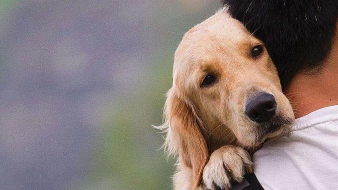 养犬不拴绳?最新注册送体验金平台养犬管理立法已有进展