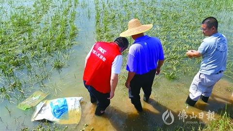 借政策东风 佛山多措并举发展农业保险 服务三农助力乡村振兴