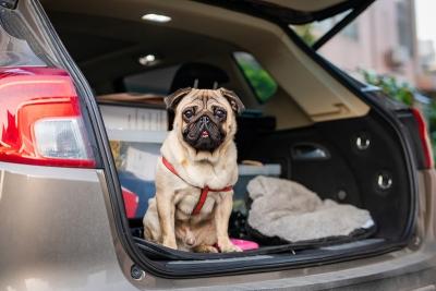 重要须知!如果打算养狗,就请对它一辈子负责!