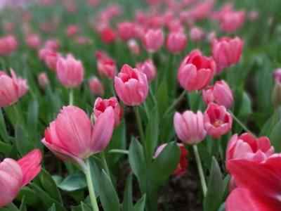 陈村花卉旅游文化节29日开启!十大展区等你来赏