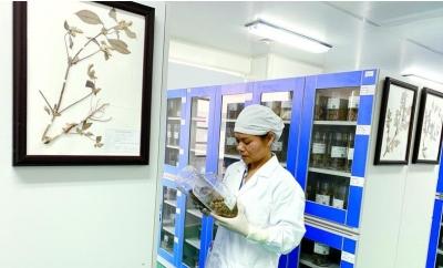 广东一方制药质量中心副主任工程师叶瑞莲:尝药数千种 把好药材关