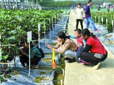 500多个良种集中亮相 看新奇农产品 享田园采摘乐