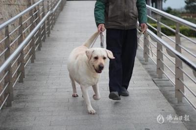 遛狗要拴绳 养犬更文明