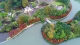 落羽杉红了!禅城冬日斑斓美如油画