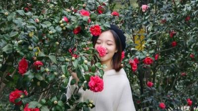 最新实拍!南海800多亩茶花灿烂绽放,免费赏!