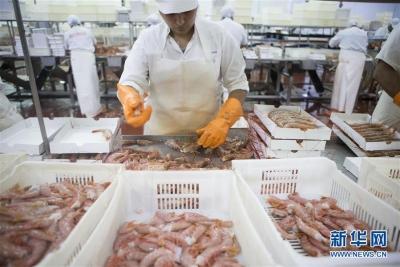阿根廷红虾征服中国人味蕾
