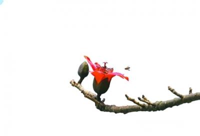 繁花裹绿枝 淼城赏花季