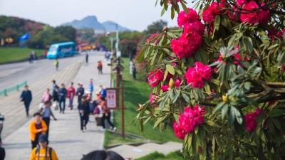 清明去哪玩?贵州这处繁华似锦景点对广东籍游客免费