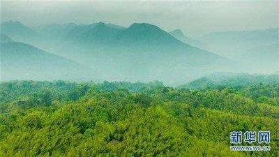 我国拟修改森林法 下放采伐限额审批权