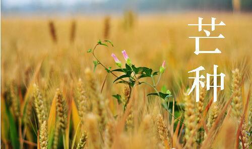 芒種:春紅零落綠正濃 生如夏花愛高潔