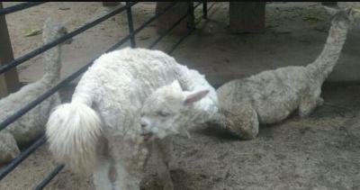 """中山公园动物园动物避暑?#23567;?#20937;方"""""""