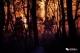第一现场|全景记录 扑救高明凌云山森林山火