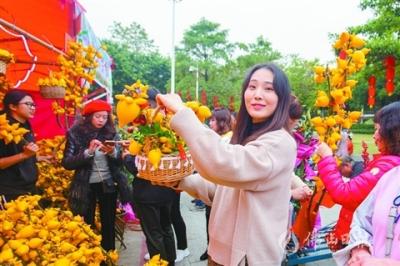 花美节目多 花街短视频吸睛 禅城南海花市迎客