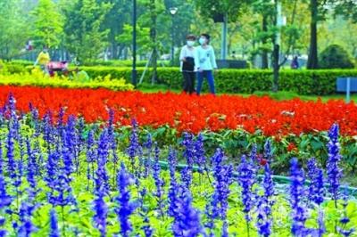 禅城:花境百花开 美到人心醉