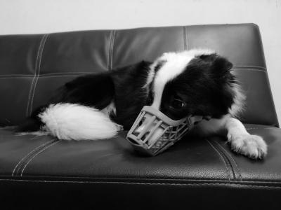 評論丨用剛性治任性 引領文明養犬