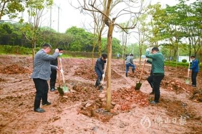高明區幾套班子領導參加植樹活動  栽下一片綠 美麗一座城