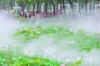 雾里看花 仙境醉人 亚艺公园禅荷花岛雾景上线