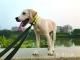 新规满月 市民养犬有何新变化?