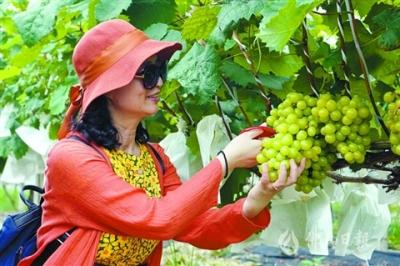 打響富硒水果品牌 三水南山十里水果長廊人氣不斷攀升