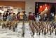 省文化馆第二批特聘创作员培训班在佛山举行