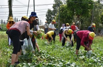 展現古鎮之美 三水區蘆苞農民豐收節活動9月27日舉行