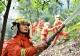 佛山進入森林特別防護期  未經批準禁止一切野外用火